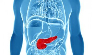 outline-of-organs-with-pancreas-in-solid-red