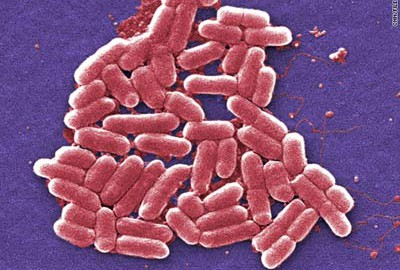 Programmable Bacteria are recognized for curing diseases.