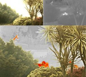 RFEL-visual-and-IR-garden-fusion-456-300x278